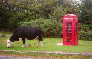 Red Telephone Box Byte Size Scotland