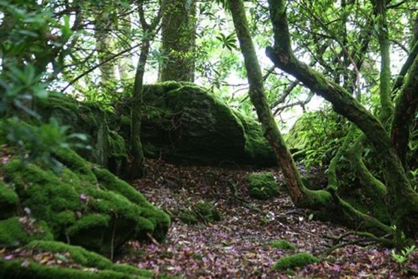 Caol Ruadh Sculpture Park Woodland